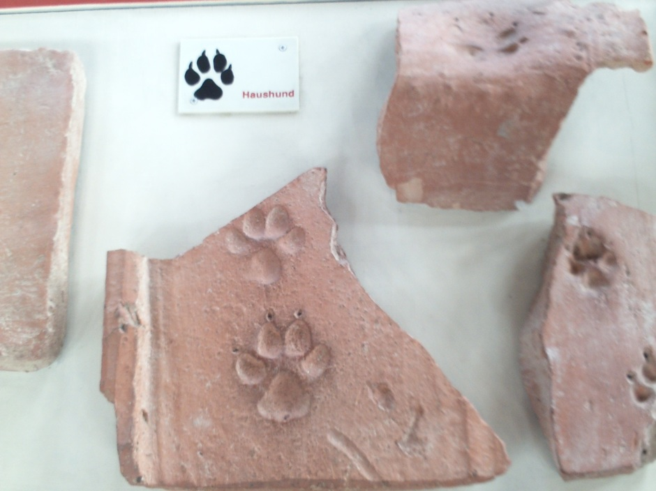 Auch Tiere aus der Römerzeit haben ihre Spuren in der Römervilla hinterlassen. Beim Herstellen des Dachziegels hat sich ein Hund verewigt.