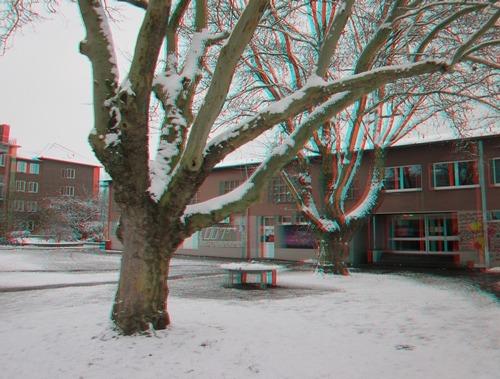 Ideale 3D-Motive: alte Bäume. Die halten wenigstens still.