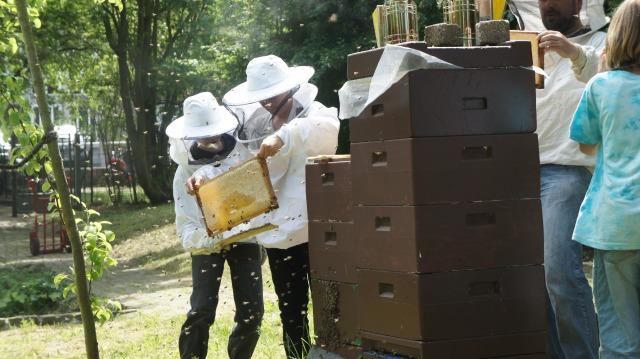 Ein Bienenvolk wird von 2-3 unserer Jungimker betreut