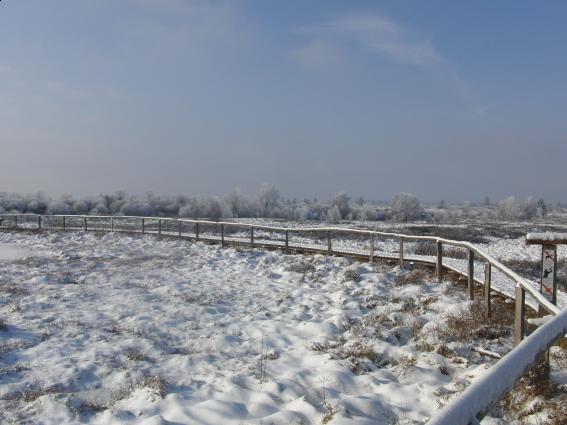 Nach einem Start bei eisigen Temperaturen und dichtem Nebel, klarte der Himmel nach einer Stunde auf, sodass die unterschiedlichen Landschaftsformen des Hohen Venns erfasst werden konnten.