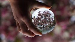 Fotowettbewerb Magnolie im Klostergarten