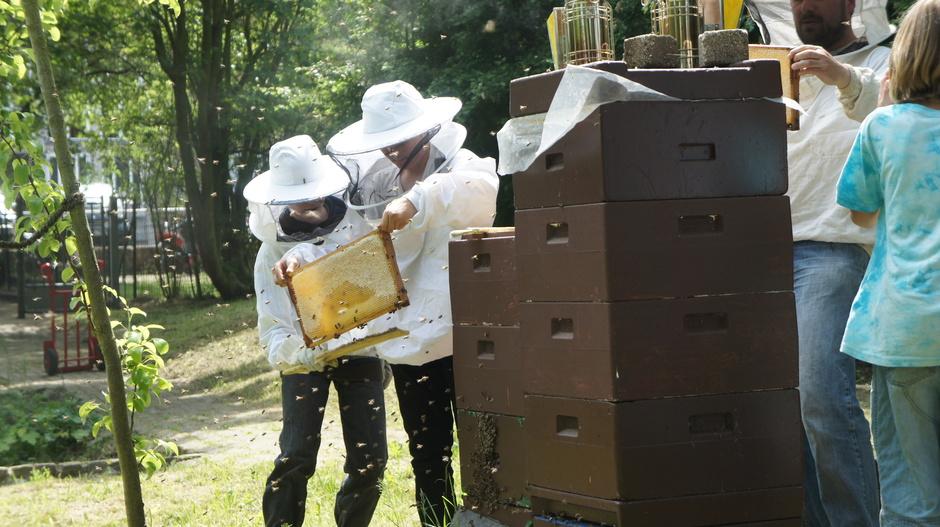 Fast ganz verdeckelt ist diese Honigwabe – bald kann geschleudert und der Honig in den Pausen verkauft werden. Schüler und Lehrer der Imker AG am Bienenstand in unserem Bio-Garten: Ein faszinierendes Hobby…